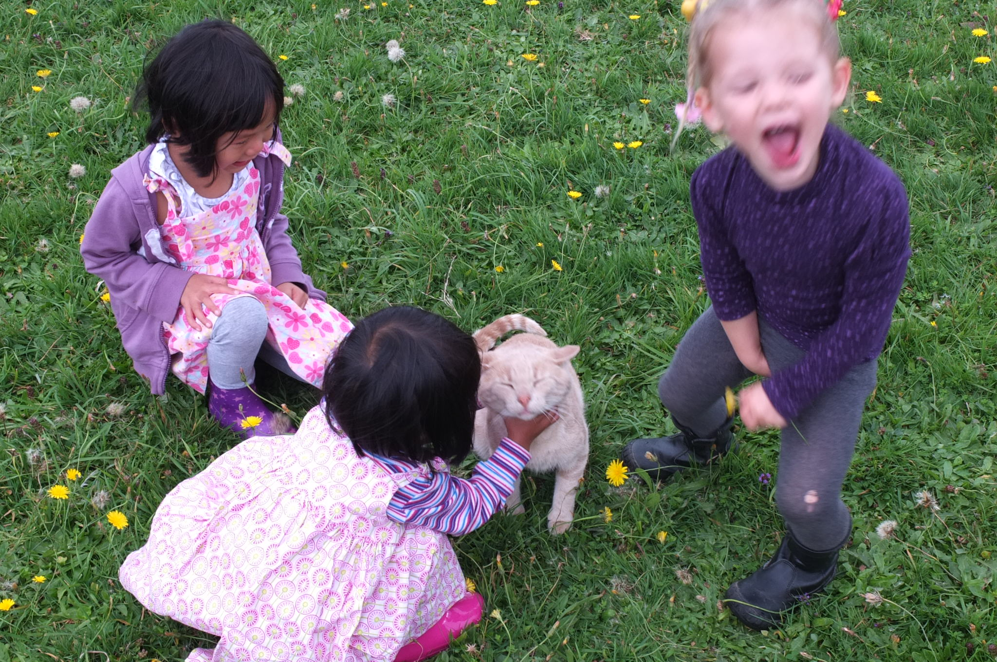 Our girls enjoyed playing with Leela and her cats.