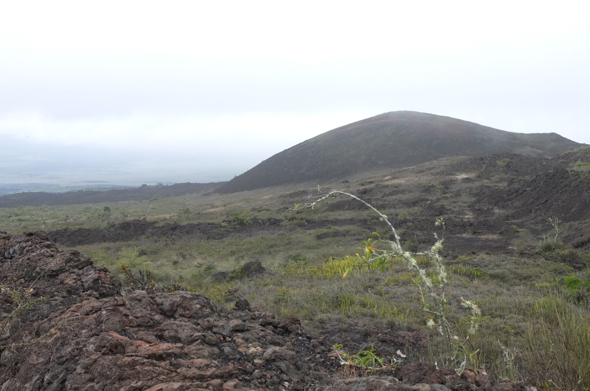 Trekking up to the active volcanic mountain on Isabela