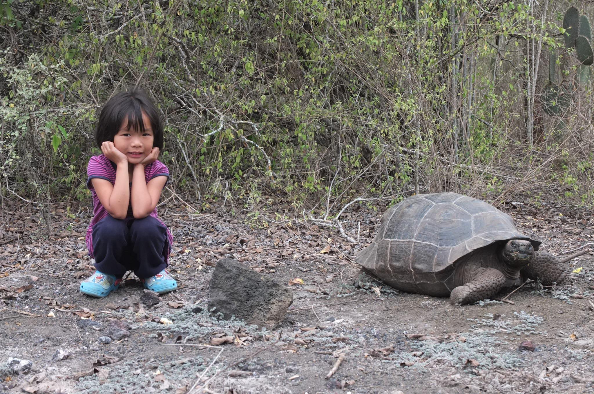 Giant tortoise everywhere