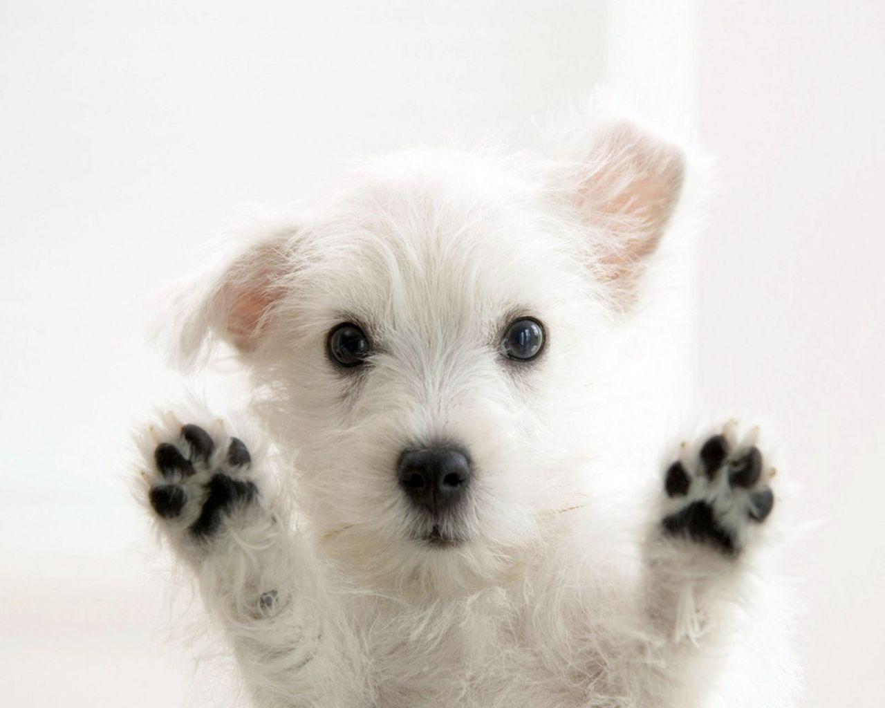 Puppy Ghana