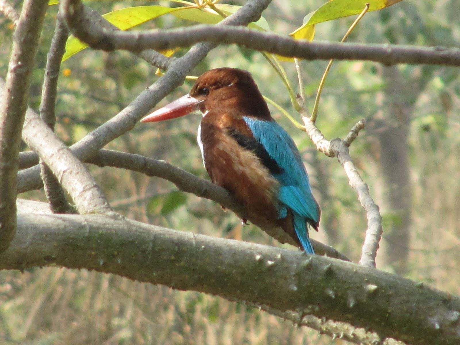 yamuna Biodiversity Park GoBeyond