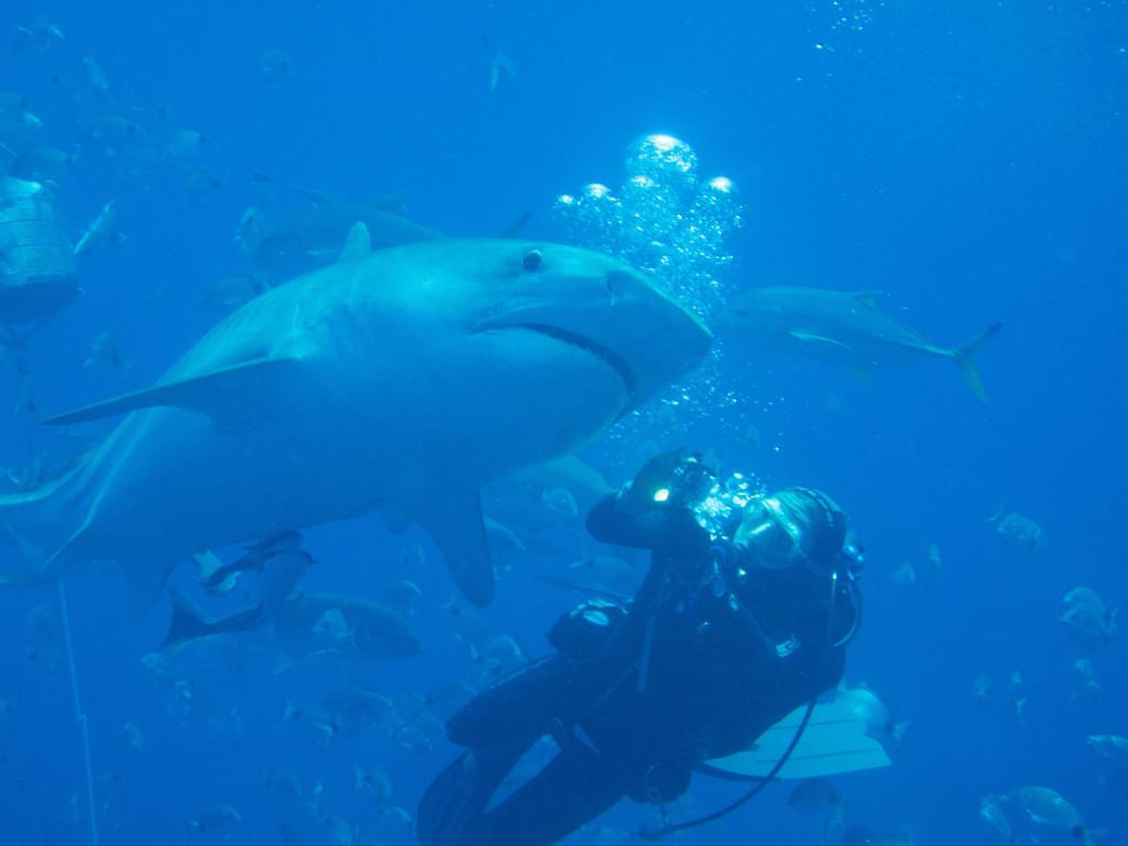 Huey Ying Dive 2