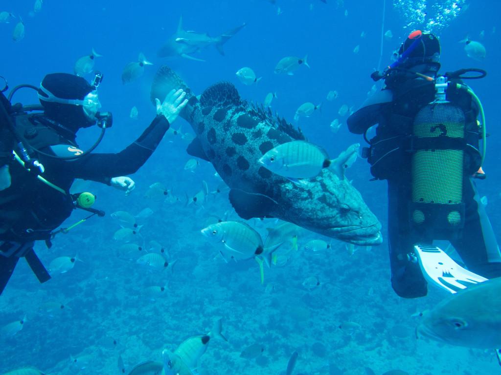 Huey Ying Dive 3