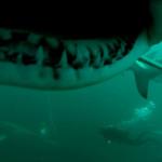 Huey Ying Dive 9