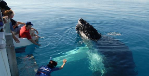 whalewatching1