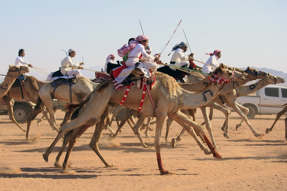 Saudi Youths enjoy the annual camel racing competition in celebration of Eid in the town of Abu Ajaj. (Mohammed Albuhaisi/ Getty Images)