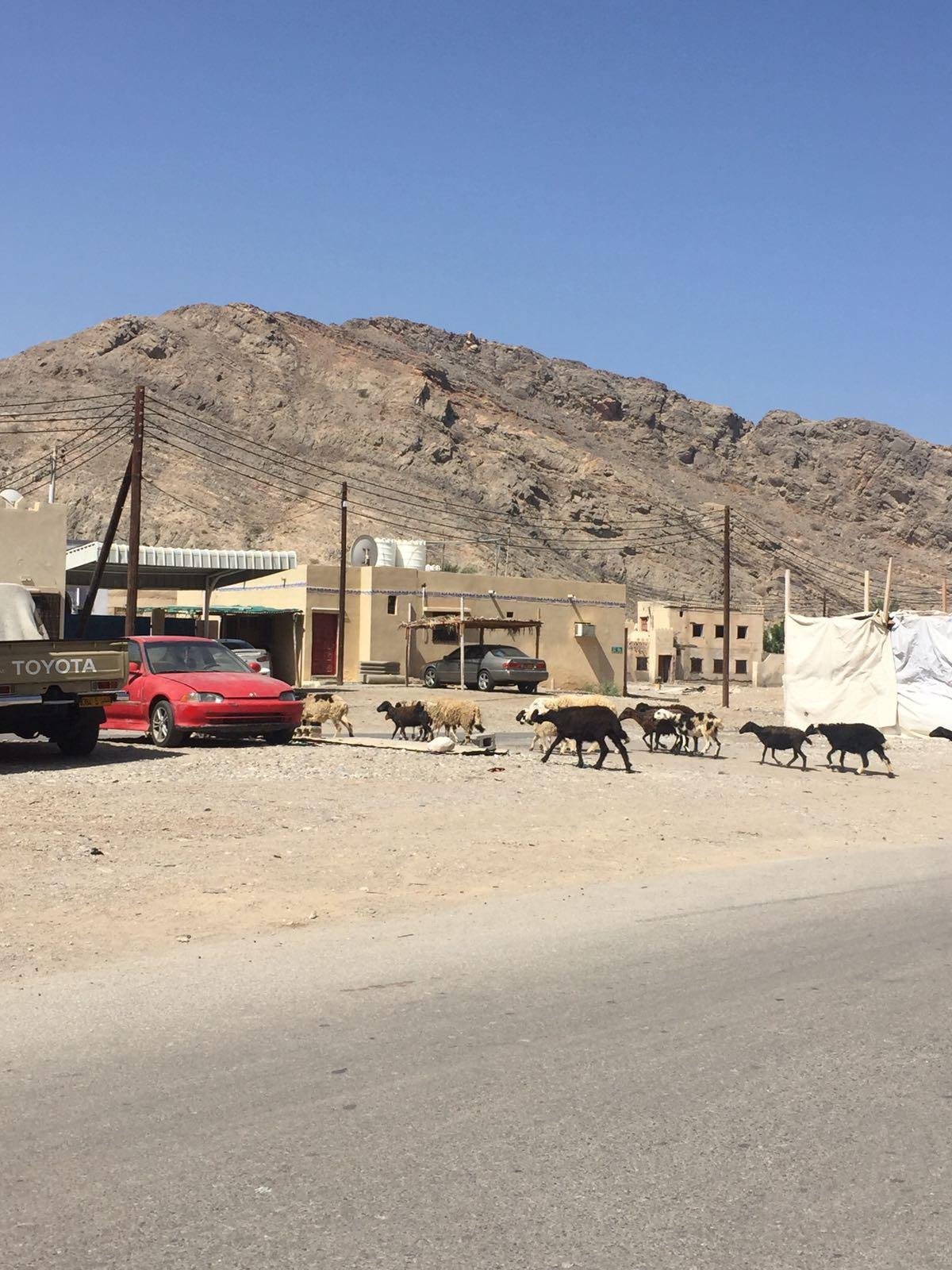Oman Article pics.jpeg