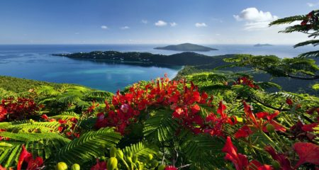 ocean-flowers-caribbean-islands