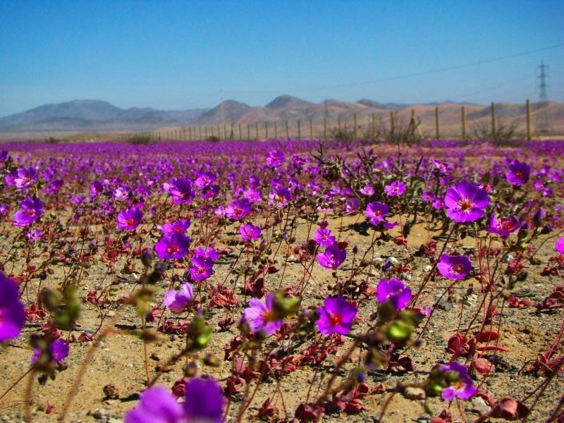 desierto-florido-2009